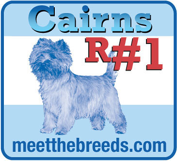 Cairn Terriers R #1   Get your breed at www meetthebreeds co
