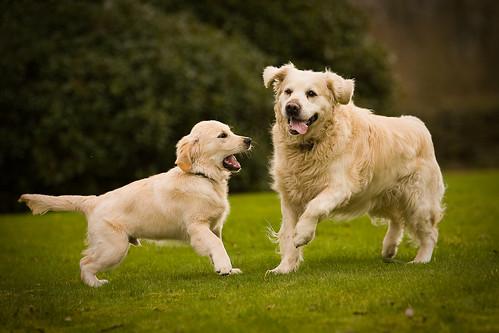 Milo S Dog Treats