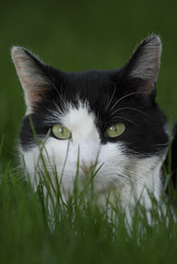 Cat in the Grass | by Troy Snow