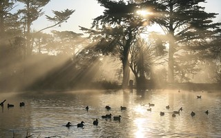 Nature Crepuscular Rays in Golden Gate Park | by Trodel