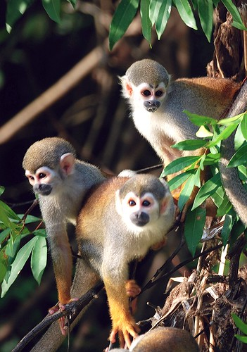 AMAZON - RIO NEGRO    MONKEY BEGGERS | by vermillion$baby
