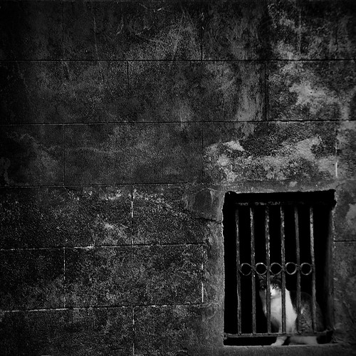 Gatos02 / Serie alCATraz | by Seba Pani´s Photo