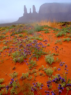 Monument Valley the BEAUTIFUL NIZONIH | by Nihihiro & Shihiro