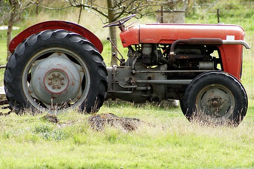 Orchard Tractor Massey Ferguson 50 : Massey ferguson an old orchard tractor having a rest