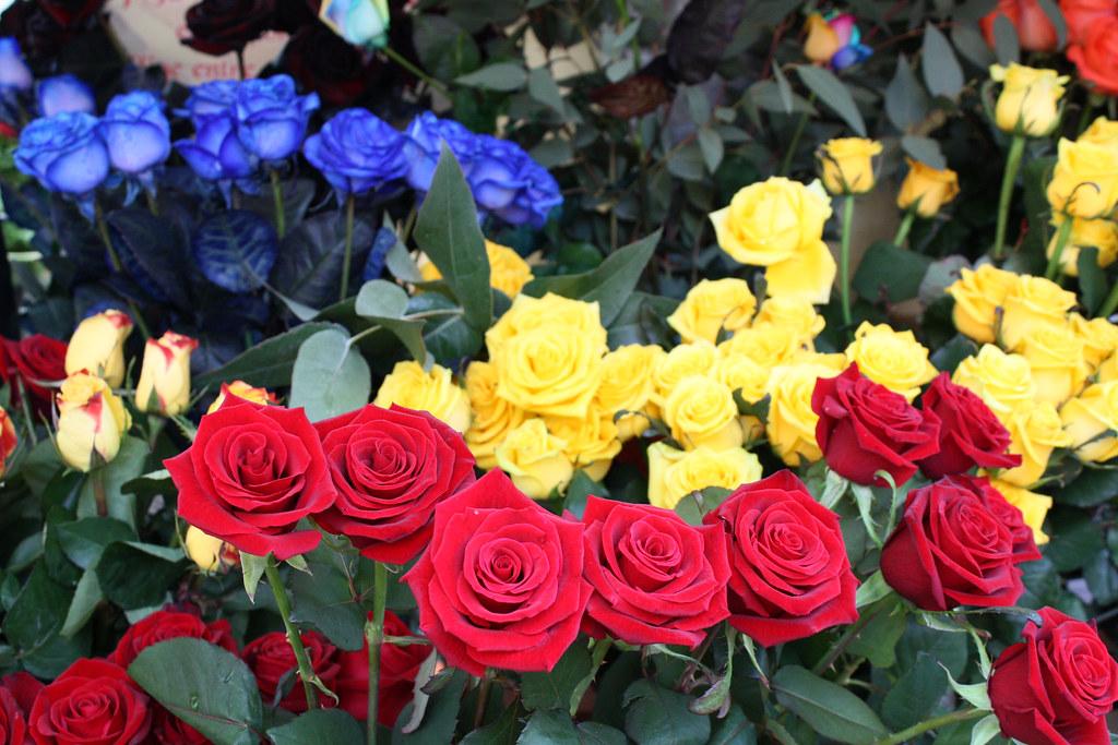Rosas Rojas Azules Y Amarillas Agatabcn85 Flickr