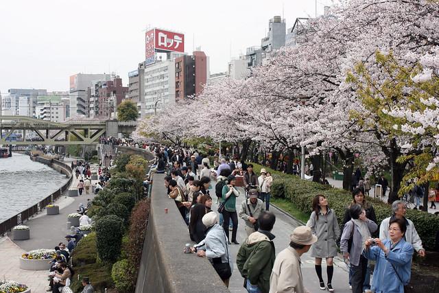 Sumida Park cherry blossom viewing