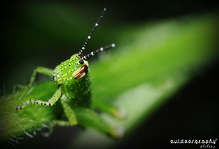 Outdoorgraphy™ : Hopper | by Sir Mart Outdoorgraphy™