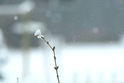 snow! | by the mayfly