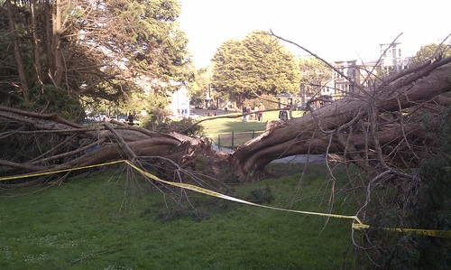 Another tree down in Duboce park | by TheJosephBoys