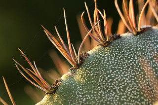 Cactus | by AngelaBax