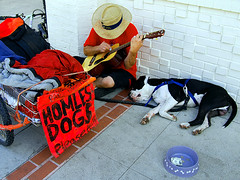 Homeless Dogs Please Help | by danorth1