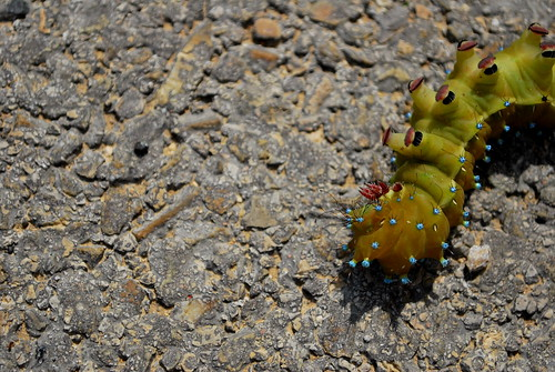 Huge Caterpillar | by goingslowly