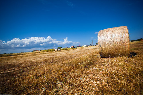 Things of Countryside (Salento - Puglia - Italia - Italy) | by Gojca