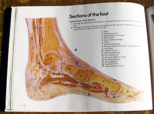 A Colour Atlas of Foot and Ankle Anatomy Wolfe Medical | Flickr