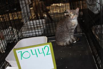Lost Tortoiseshell And White Cat Walsall