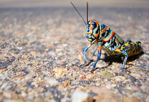 so, two grasshoppers walk into a bar ... | by Esther17