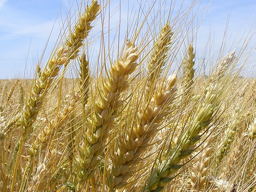 Powerful grains | by Alda Cravo Al-Saude