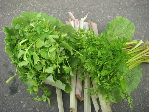 Hand-picked wild greens | by Blue Lotus