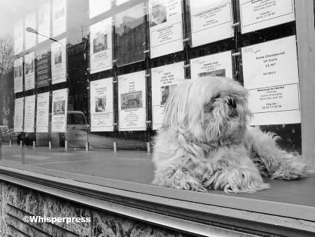 combien ce petit chien dans la vitrine 169 whisperpress fra flickr
