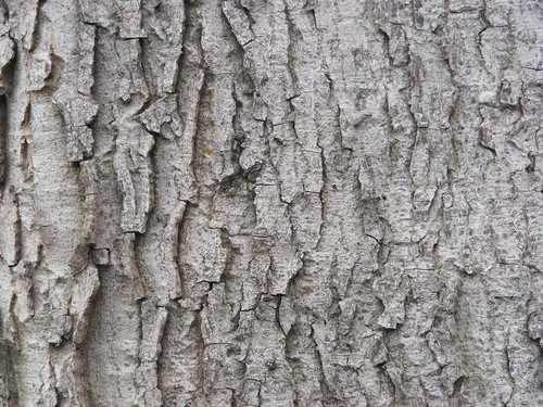 Tree-Wood-Texture-7 | by SmashingApps.com