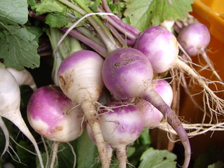 Turnips | by swampkitty