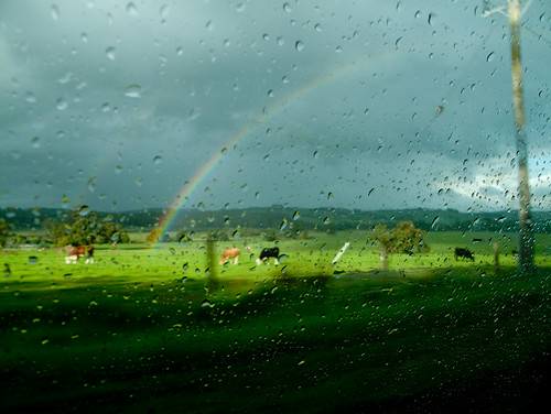 rainbow and cows | by birds & trees