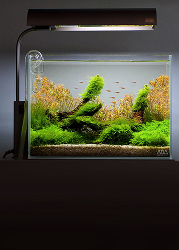 Ada Solar Mini Vs Chihiros Aquasky The Planted Tank Forum