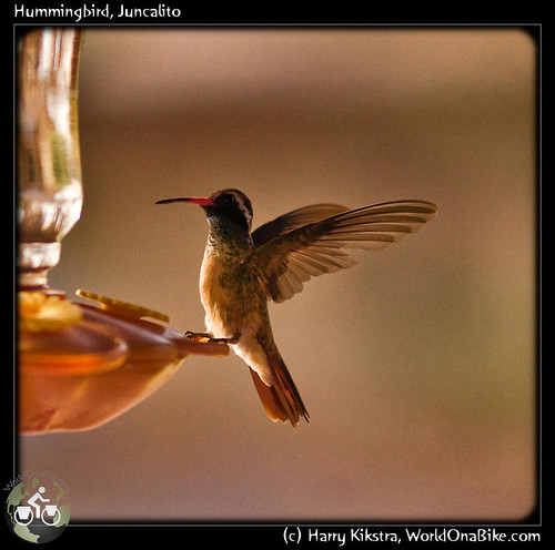 Hummingbird, Juncalito | by exposedplanet
