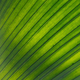 Green stripe | by @Doug88888