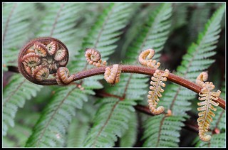 Fern Frond | by Chook with the looks