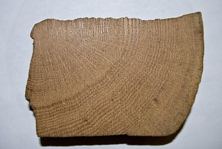 Piece of wood from First U.S. Mint