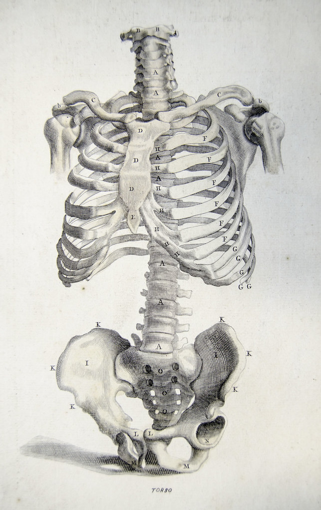 Front View Of The Bones Of The Torso Plate 2 Showing Engra Flickr