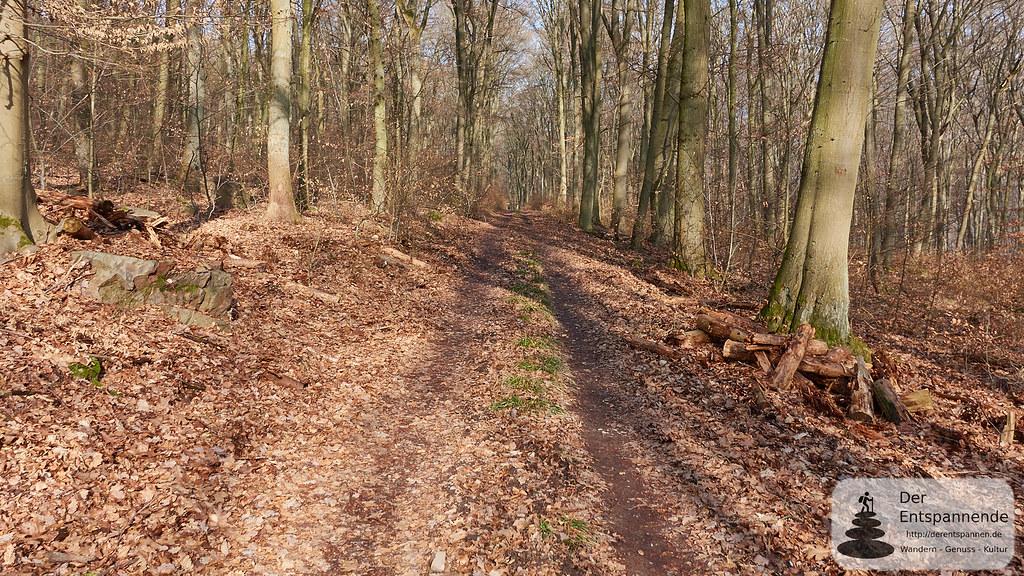 Wandern im Binger Stadtwald