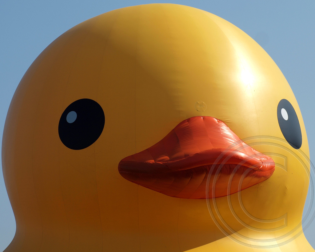 RUBBER DUCK Floating Inflatable Sculpture by Florentijn Ho… | Flickr