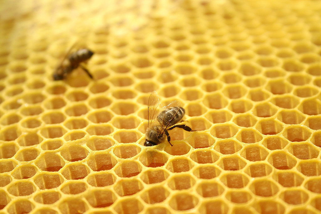 Image result for bee keeping