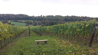 Hambledon Vineyard | by Fareham Wine