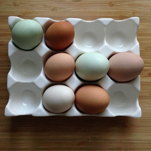 Good morning! Fresh eggs from a friend! | by Golly Bard