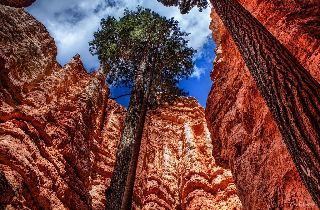 Bryce Canyon Gorge
