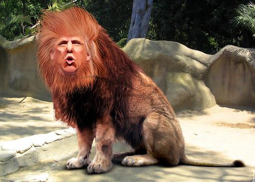 Donalt Trump Dog S Ear Syst
