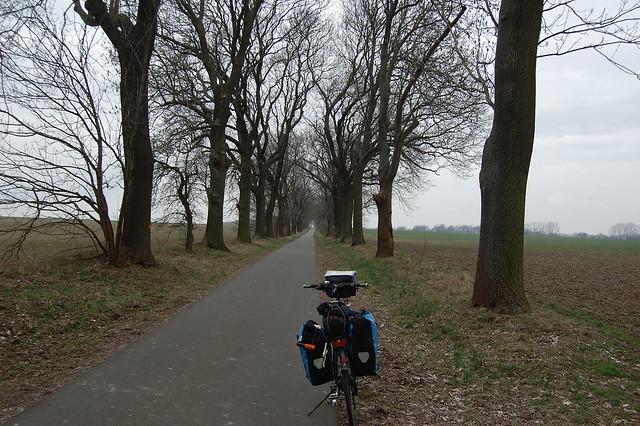 Bild: Das Fahrrad in einer Allee mit grossen, unbelaubten Bäumen zwischen frisch bestellten grünen Feldern