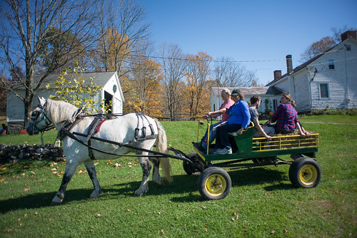 Patty & the Alans on a Horse Cart Ride | by goingslowly