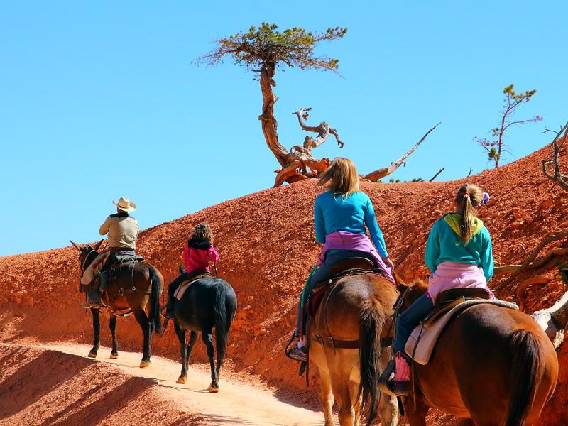 IMG_4869 Mule Ride