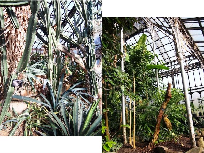 Glasgow guide: Botanic Gardens