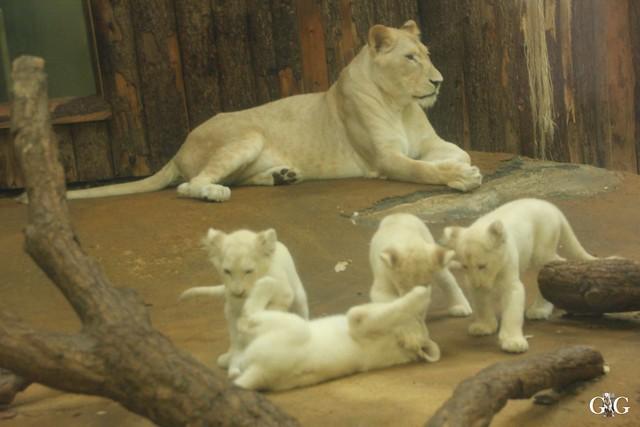 Ausflug Zoo Magdeburg 11.03.17 Teil 1.18