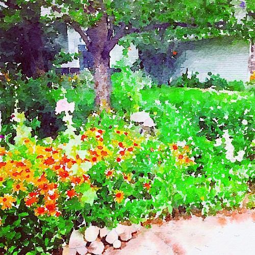 Neighbor's perennials Painted in #Waterlogue | by jhhymas