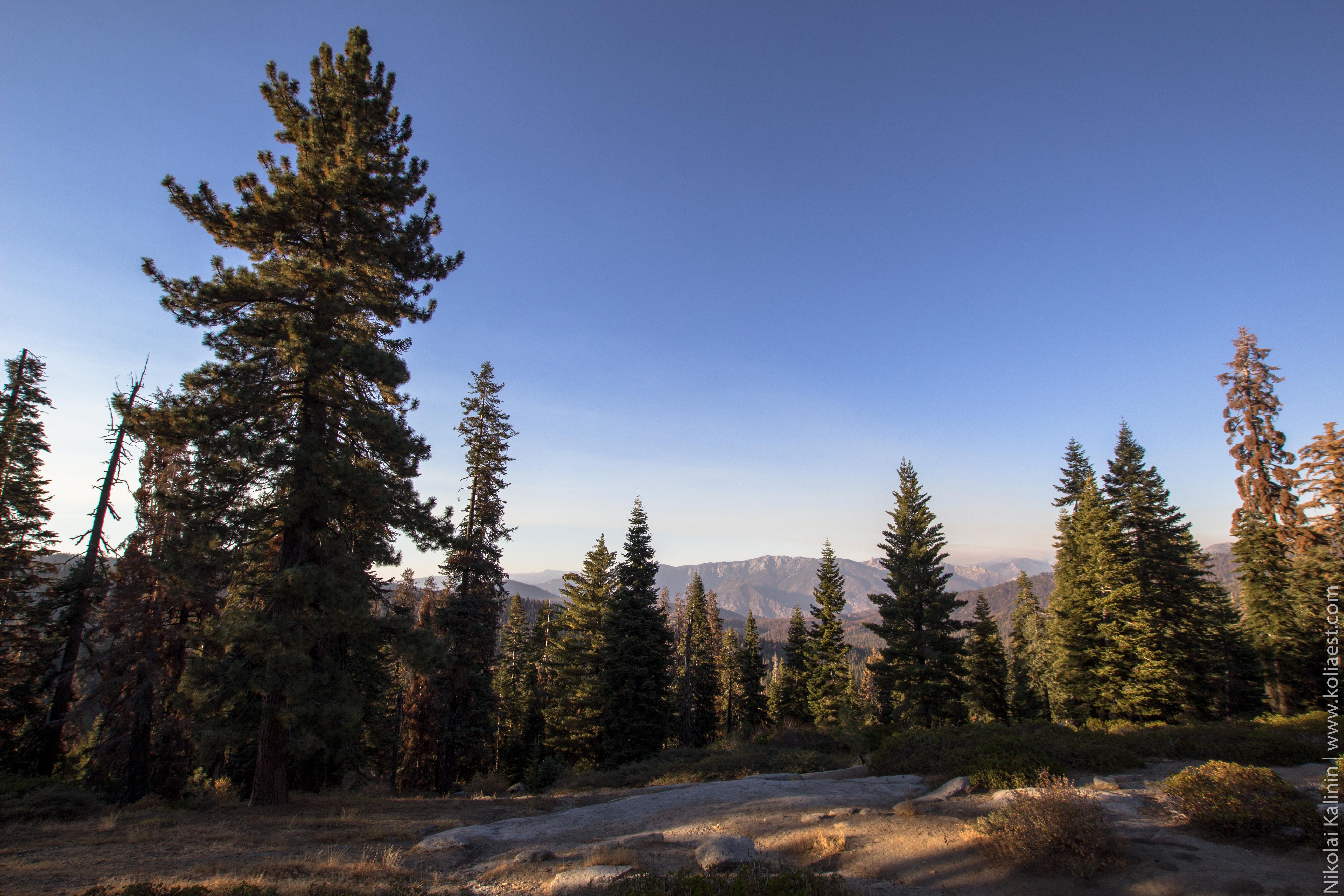 Sequoia-87