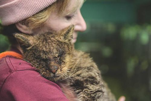 untouchable-cat-sarcoptic-mange-hugged-valentino-2-1