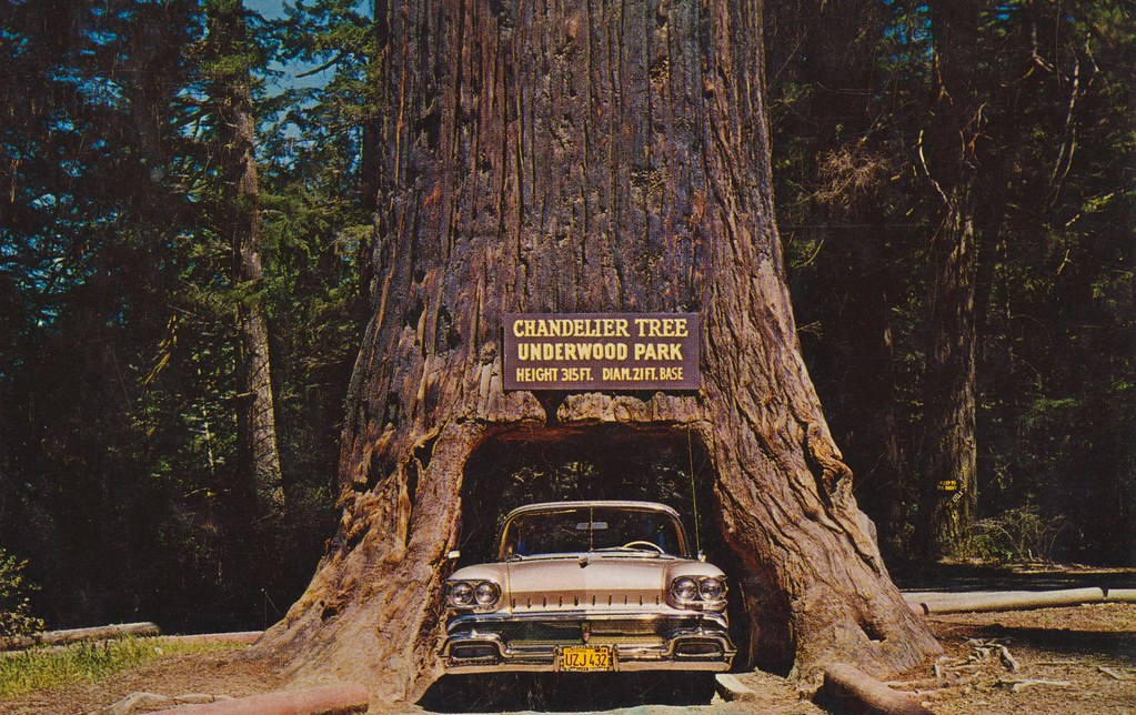 Chandelier tree of the redwoods underwood park californ flickr chandelier tree of the redwoods underwood park california by the cardboard america archives aloadofball Choice Image