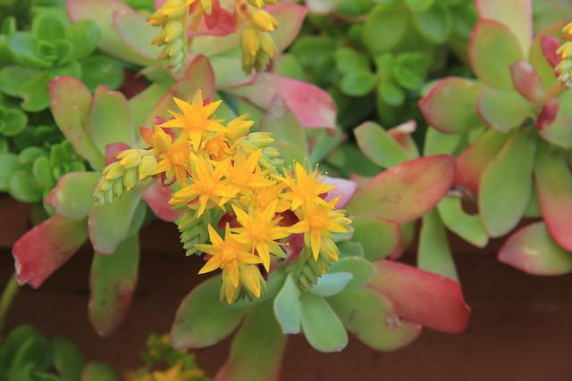 Flowers, Spezieria di Santa Fina