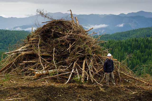 photo of a man standing before a pile of slash